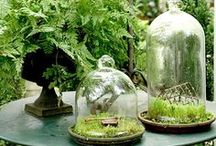 Cloches / by Wendy de Rooy