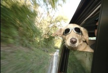 Animals and Cars / West Broad Hyundai serves Richmond, Glen Allen, Midlothian, Chesterfield and Mechanicsville, VA loves dogs. Especially dogs in cars!  http://www.westbroadhyundai.com/