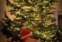 MERRY CHRISTMAS / by Marly Aligleri