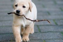 Dogs / Cuteness overloaded