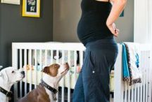 Fur Babies and Human Babies / How to make sure all your babies co-exhist happily and safely.