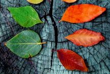 Colors and Textures / by Chitti Sugadhan