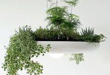 Green//Garden