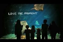Love the Moment / lovethemoment.visitvirginiabeach.com / by Virginia Beach | Live the Life