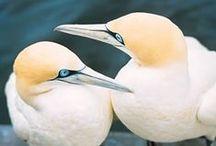 Coastal Birds of South Africa / Coastal Birds of South Africa