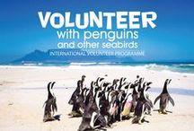 Volunteer-SANCCOB Cape Town