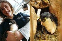 2 Oceans Aquarium - Cape Town