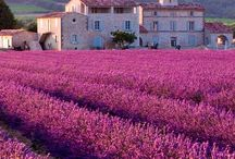 Provence...