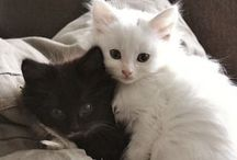 the prettiest kittens / simply this board purpose is to make me melt out of cuteness when i look at it