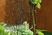 La Petite Gardenia Terrariums