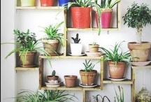 grow / Ideas for my summer garden