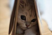 cute animals / adorable animals, but most likely it will be full of kittens. :) / by kayla marquardt