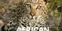 African wildlife / Celebrating the diverse and amazing wildlife of the continent of Africa.