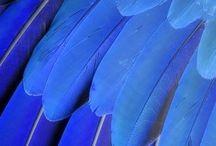 Veren / Alle veren die ik mooi vind