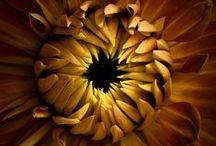 kwiaty z bliska..