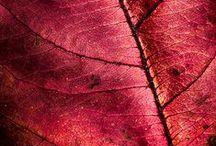 kolory - czerwień