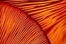 kolory - pomarańczowy