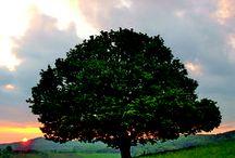 Lebensbäume / Eine Entdeckungsreise zu den Bäumen, Wäldern unserer Erde
