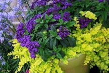 Gardens and planters / by Bethany Preble