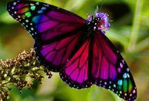 Butterflies / All things Butterflies--symbol of change!