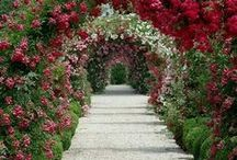 Garden Arches, Gazebos & Pergolas / Create beautiful tunnels and archways with quality garden arches, gazebos and pergolas