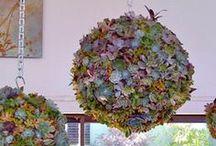 Gardening -outdoor ideas