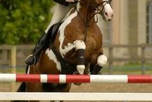 jumping horses / by Maddie Hankinson