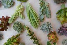 verdure / plants, greenery, nature
