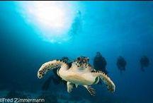 July 31.07. -07.08.2014 Dive Safari Trip - MY Blue Pearl / July 31.07. -07.08.2014 Dive Safari Trip - MY Blue Pearl On board MY Blue Pearl. July 31.07. -07.08.2014 RedSea, Egypt. Visit www.blueplanet-liveaboards.com.