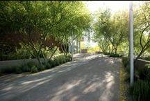 Przestrzeń publiczna / Aranżacja zieleni w przestrzeni miejskiej