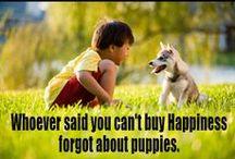 Dogs Wisdom
