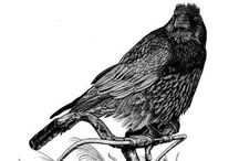 Ravens / I love Ravens / by Martine Calomino