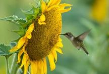 Birds Amongst the Blooms / Just love to watch the birds sipping sweet nectar from the flowers. / by Stephanie Vandermey