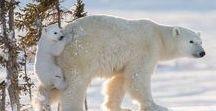 ANIMAL PARENTS❤️ / Amazing , beautiful and gorgeous!