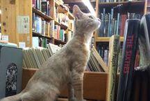 Katter och andra praos