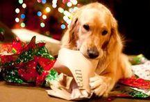 Christmas Holiday / Ideas related to the Christmas season.