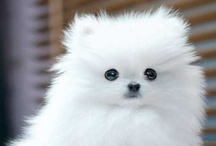 Fluffy Animals / Absolutely adorable animals.