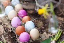 Velikonoce / Easter / by OREA HOTELS