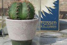 Cactus / Cactussen en vetplanten