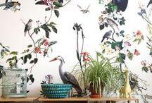 Wall / wallpaper, painted walls