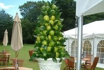 Event Floral Design styling / Adorn your outdoor space..