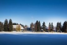 Orea Resort Devět Skal / Krásné místo pro Váš odpočinek uprostřed Vysočiny.  Sněžné - Milovy 11 Svratka / by OREA HOTELS