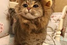 Cats, Kittys and Kittehs / The fluffiest and funniest cats on the net.