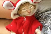 Cats in Clothes / The best clothed kitties.