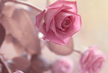 Sweet in Pink / There is nothing so pretty as pink!
