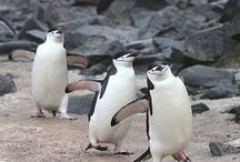 In love with penguines / There's nothing cutter and more loveable than a penguine!