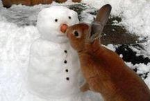 Rabbits for Randy / My husbands joy, his rabbit!