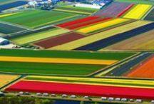 Nederland + Dutch stuff <3