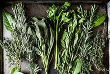 Herbs Glorious Herbs / We love Herbs!  Always sharing information about herbs and their benefits.