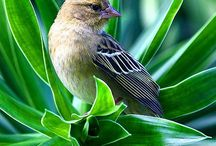 Birds / There are many kind of birds that you still do not know. Birds are gorgeous animals and many of them have amazing colours. Either big or small they are just another masterpiece of God.  Don't be shy to repin or follow! ~With love Ana~